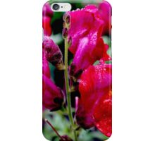 Wet Red Snapdragon iPhone Case/Skin