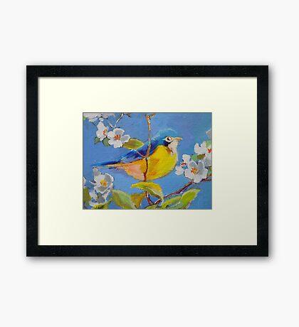 Little Yellow-Blue Bird Framed Print