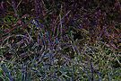 Glowing Grass by Avril Harris