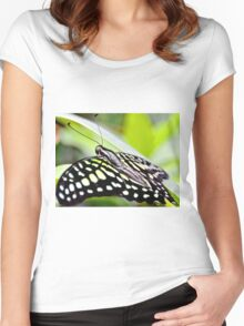 Tailed Jay Butterfly Women's Fitted Scoop T-Shirt