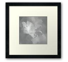 Lily In Fog Monochrome Framed Print