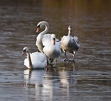 Negotiating the Ice by Nigel Bangert