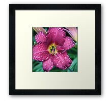 Today's Lily Framed Print