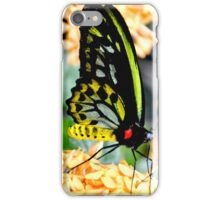 Great Mormon Butterfly iPhone Case/Skin