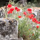 Pillow - Aghia Triada Poppies by Francis Drake
