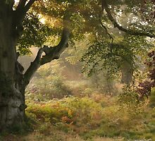 Autumn by Graham Ettridge