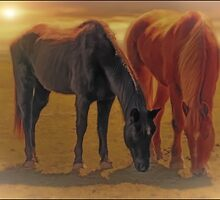 Horses In The Sunset by TOM YORK