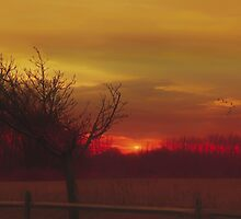 Rural Sunset by TOM YORK