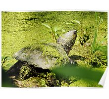 Snapping Turtle & Frog Tanning. Poster