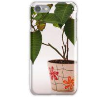 plant in a pot iPhone Case/Skin