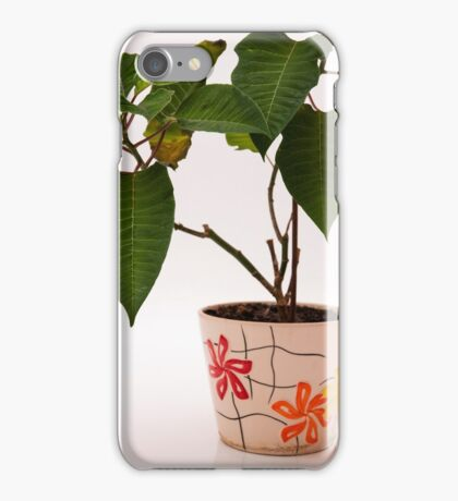 plant in a pot iPhone Case/Skin