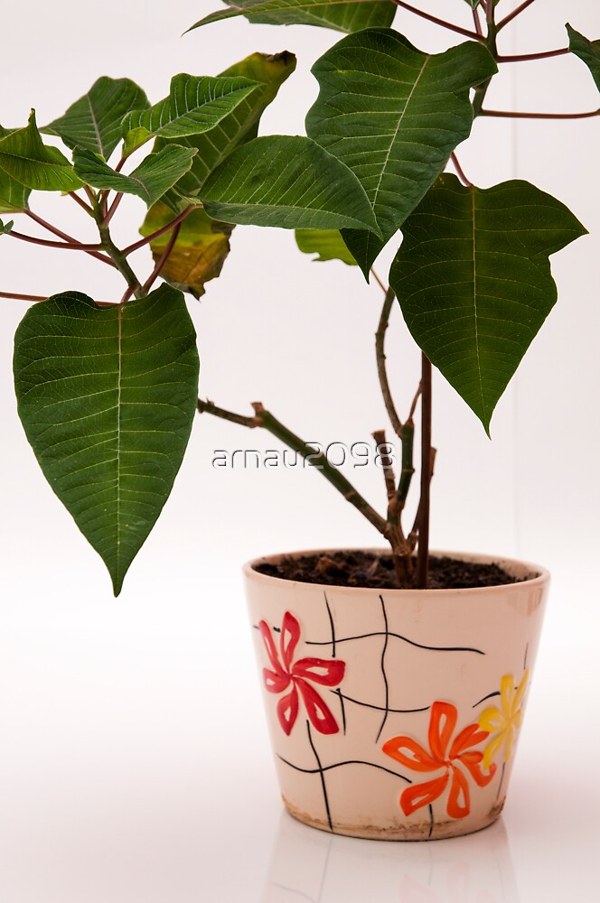 plant in a pot by arnau2098