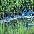 Blue Heron Reflections by J. Day