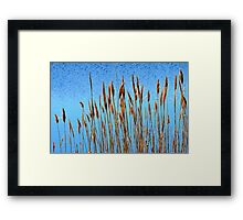 Beach Straw, Plum Island, Massachusetts Framed Print
