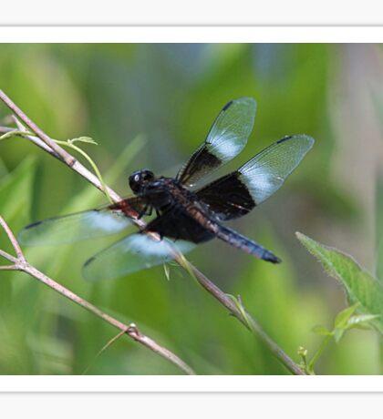 Widow skimmer dragonfly Sticker