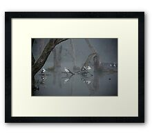 Pelicans Waking Framed Print