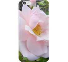 Pale Pink Rose with Bud iPhone Case/Skin