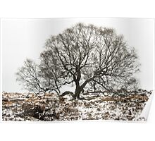 Surrounded by Winter Poster