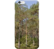trees in the forest iPhone Case/Skin