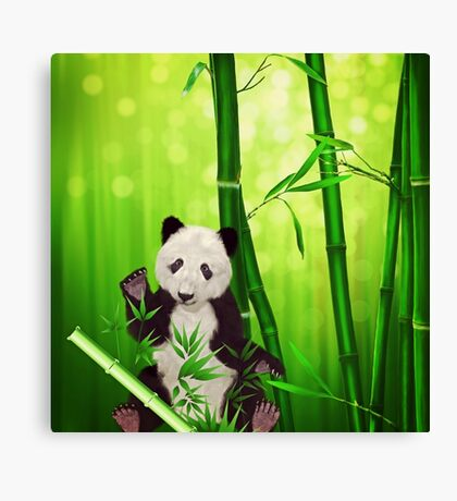Asia Panda Bear Canvas Print