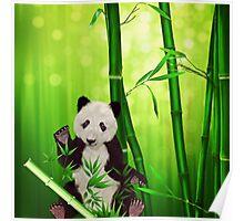 Asia Panda Bear Poster