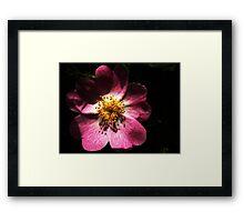 Bright Pink Macro Detailed Flower Framed Print