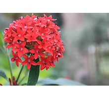beautiful red flower Photographic Print