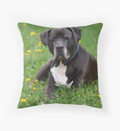 American Pitt Bull Terrier Throw Pillow