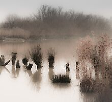 Esk River on The Glebe by Noeline R