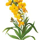 Vintage yellow flowers botanical illustration by P.J. Redoute. by naturematters
