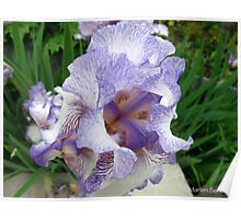 Inkblot Iris Poster
