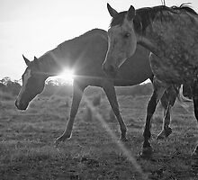 Shining Mares by Penny Kittel