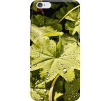 Under the Lady´s Mantle iPhone Case/Skin