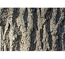 Detail on the bark of a big old tree Photographic Print