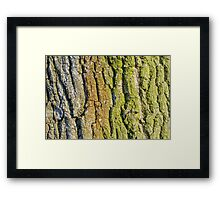 Detail on the bark of a big old tree Framed Print