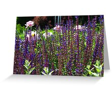 A little patch of garden Greeting Card