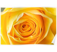 Macro of Yellow Rose Poster