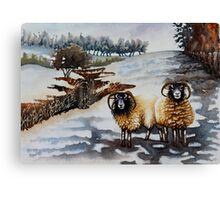 Woolly Jumper Weather Canvas Print