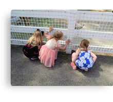 Checking Out the Farm Animals Canvas Print