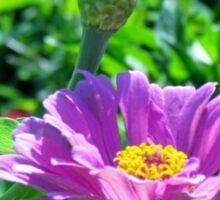 Blooming Purple Flowers Sticker
