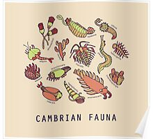 Cambrian Critters Poster