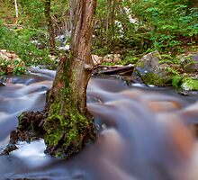 Forest flow by Mark Williams