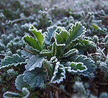 Frosty Edges by Brandon Dyzel