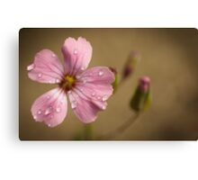 pink and wet Canvas Print