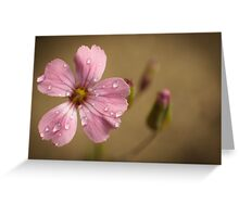 pink and wet Greeting Card