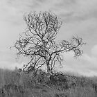 Lone Tree by sedge808