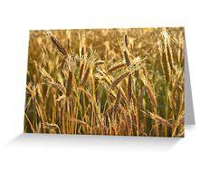 Ripening Wheat Field Greeting Card
