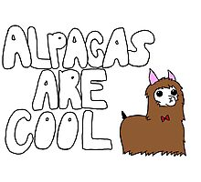 Alpacas Are Cool Photographic Print