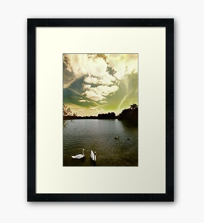Swans and Sky at Thatcham Lakes Framed Print