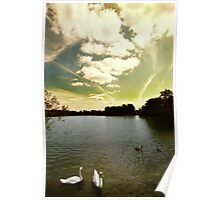 Swans and Sky at Thatcham Lakes Poster